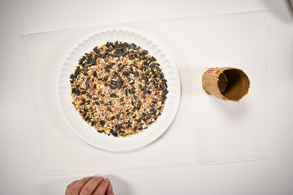 White disposable plate with bird seed on it